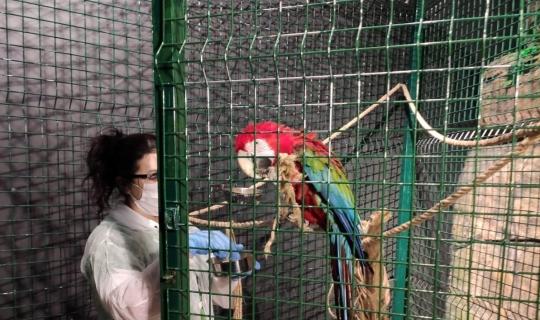Hayvanat bahçesindeki canlıların ziyaretçi özlemi
