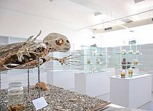Kıbrıs Herbaryum Müzesi'ne girişler ücretsiz